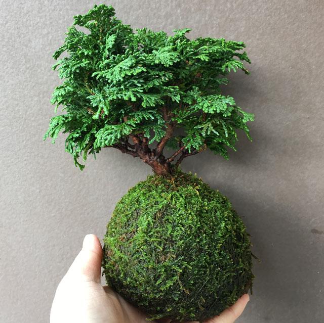 bonsaiwsblog.jpg