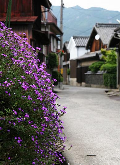 花が咲く森國酒造前