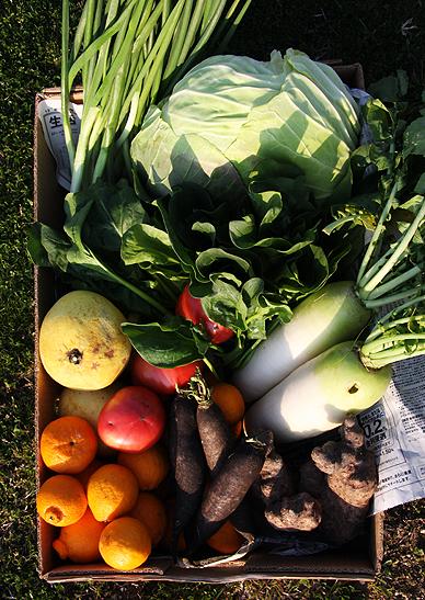 野菜プロジェクト